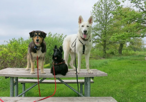 Grace with her canine siblings